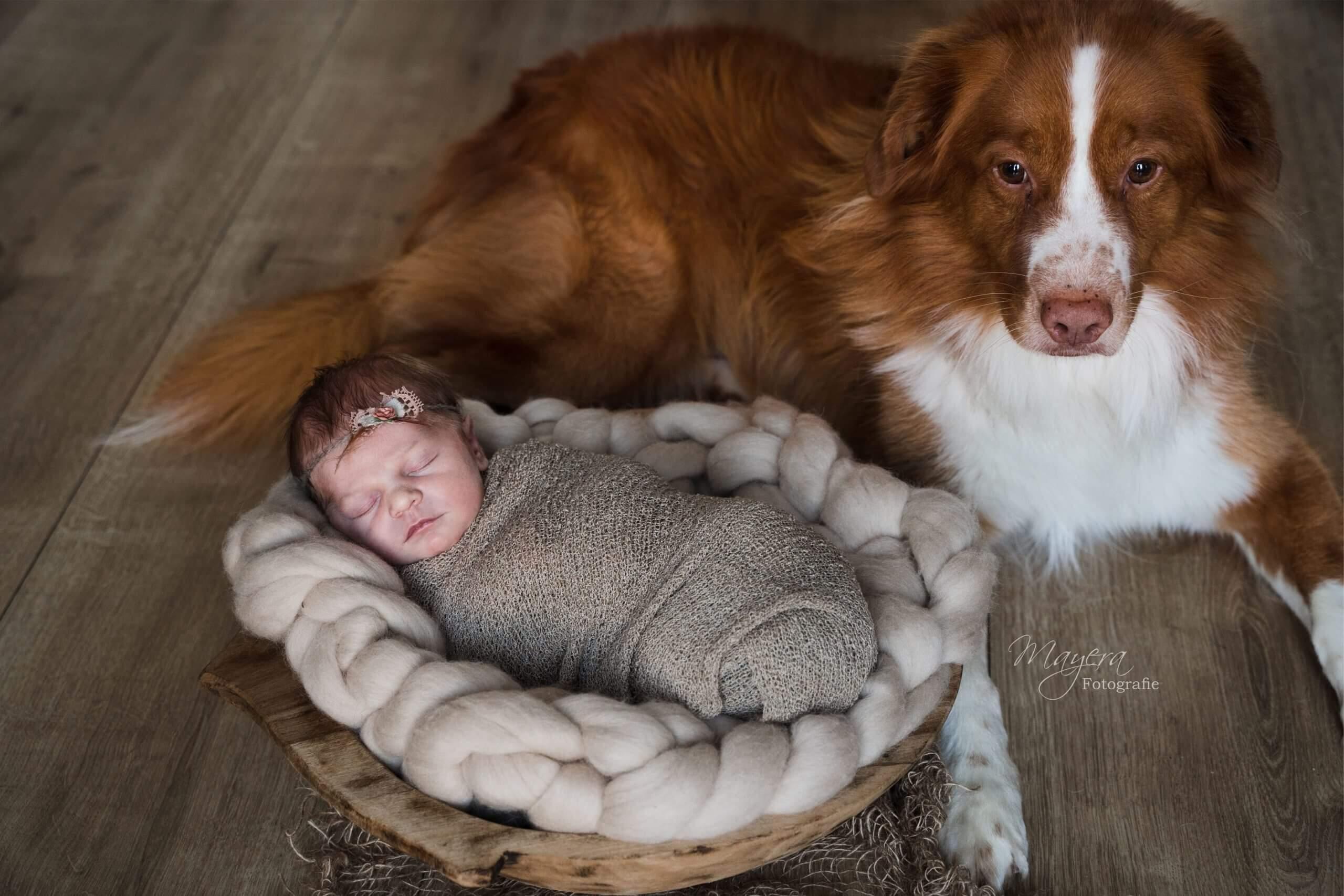 a newborn hond baby gezin wijk bij duurstede