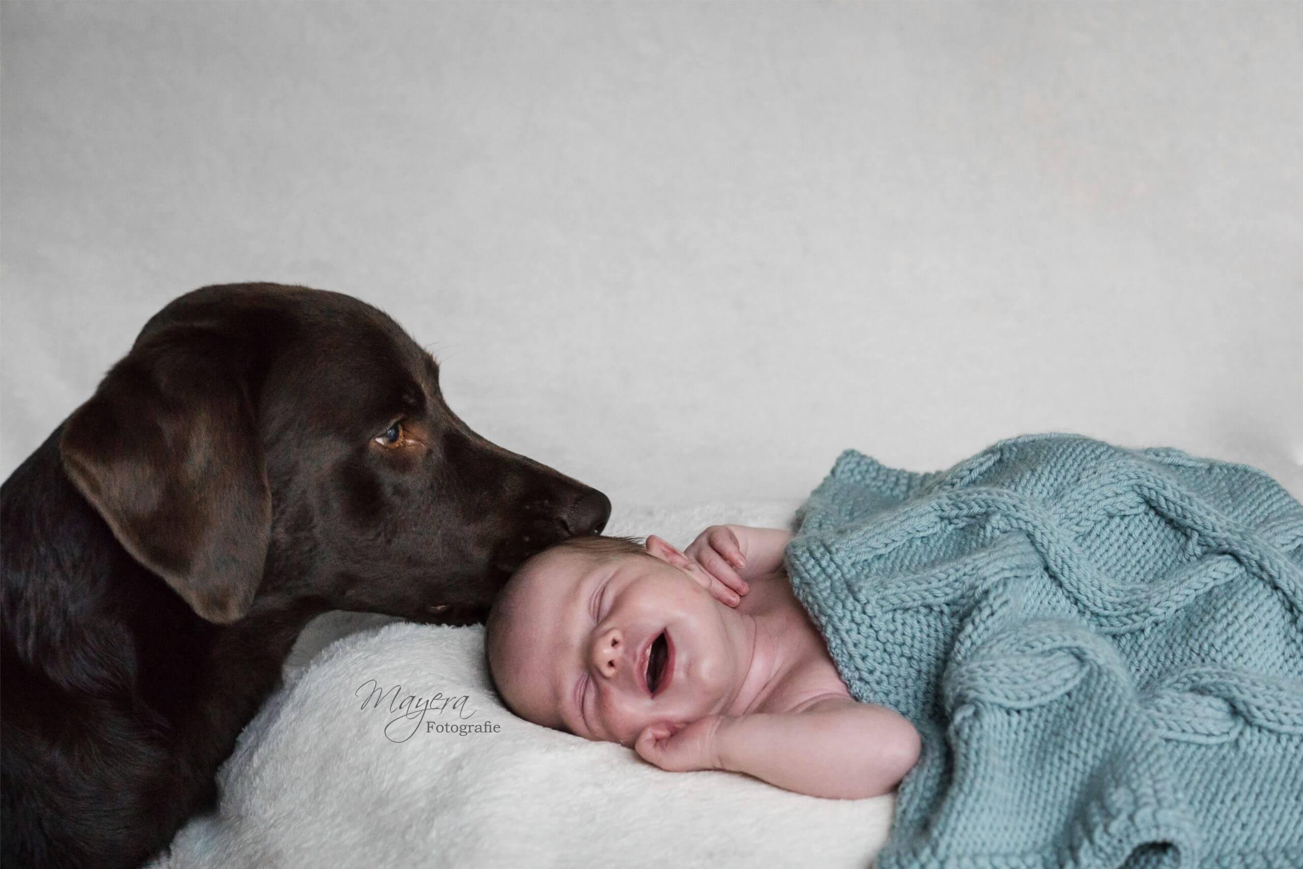 newbornfotoshoot met hond