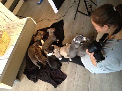 Backstage puppy's fotoshoot dieren honden